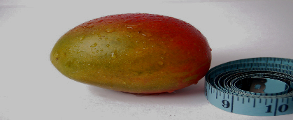African Mango Weight Loss-985-674